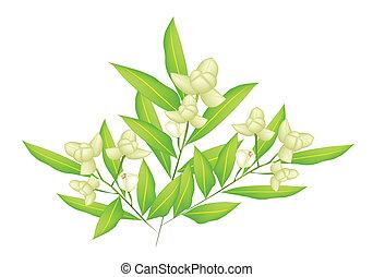 mooi, bloemen, ylang, illustratie