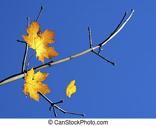 mooi, boom, leaf., herfstachtig
