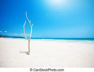 mooi, boompje, strand, dood