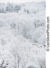 mooi, bos, winter, partij, sneeuw
