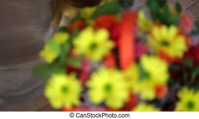 mooi, bouquetten, van, helder, bloemen, in, mand