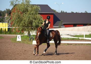 mooi, brunette, vrouw, paardrijden, (trotting), kastanje,...