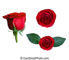 mooi, collage, van, het rood nam toe, bloem, vrijstaand, op wit, achtergrond., bloem, verzameling, voor, jouw, ontwerp
