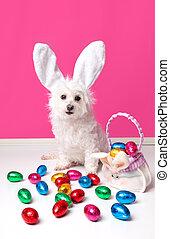 mooi, dog, met, bunny oren, en, paaseitjes