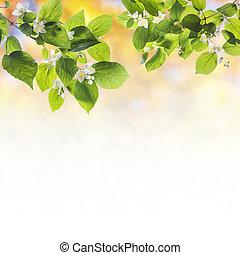 mooi en gracieus, bloeiende boom, takken, lente, achtergrond