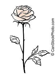 mooi, enkel, rose kwam op, bloem, vrijstaand, op, de, witte...