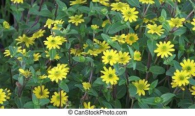 mooi, gele, flowers., weinig; niet zo(veel), gele bloemen,...