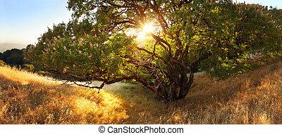 mooi, gouden, boompje, ondergaande zon , helling