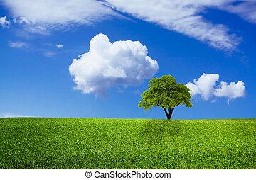 mooi, groene, natuur