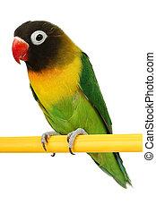 mooi, groene papegaai