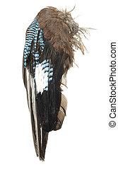 mooi, grote vogel, vleugels, vrijstaand, op, een, witte achtergrond