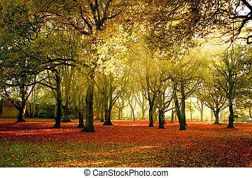 mooi, helder, herfst, kleuren, van, de, bos
