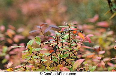 mooi, herfst bos, landscape