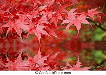 mooi, herfst, herfst, bos, scène