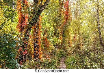 mooi, herfst, scène, bos