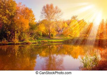 mooi, herfst, scène