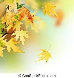 mooi, herfst