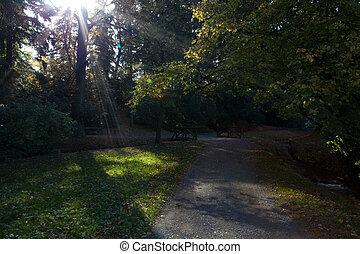 mooi, herfst, zonneschijn, bos