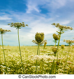 mooi, herfstachtig, achtergronden, met, wilde bloemen, onder, blauwe hemelen