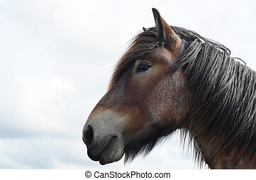 mooi, hoofd, ruimte, paarde, brabant, wisselbrief, kopie