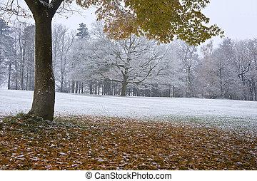 mooi, indruk, achtergrondkleur, beeld, boompje, sneeuw, bomen, een, herfst, geven, seizoenen, herfst, bedekt, bladeren, veranderen, grond