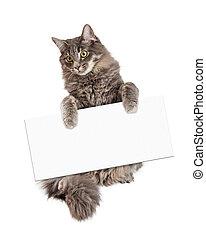 mooi, kat, meldingsbord, vasthouden, leeg