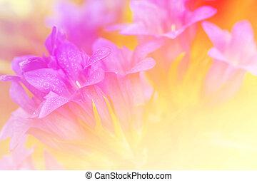 mooi, kleur, brandpunt, gefiltreerd, bloemen, zacht