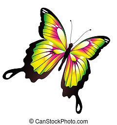mooi, kleur, witte , vrijstaand, vlinder