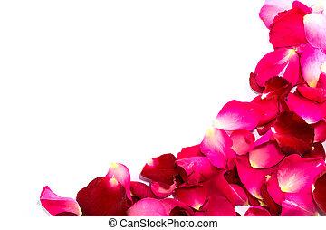 mooi, kroonbladen, rode rozen