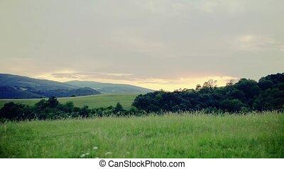 mooi, landelijk landschap, op, schemering, in, summer.