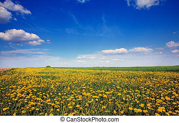 mooi, landscape
