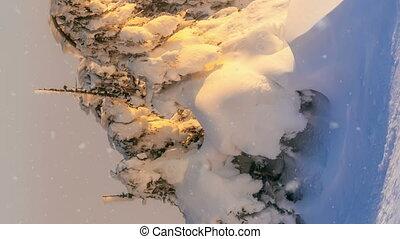 mooi, landschap., verticaal, bevroren, bomen., zeer, year.,...