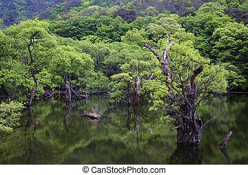 mooi, lente, landscape, jusanji, in, zuid-korea