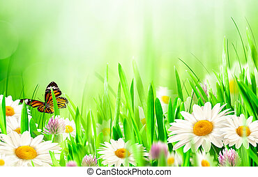 mooi, lentebloemen, chamomile, achtergronden