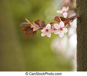 mooi, lentebloemen, in, zacht, light.