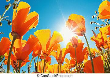 mooi, lentebloemen
