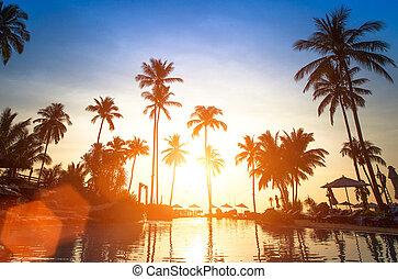 mooi, ondergaande zon , strand, in, de, tropics.