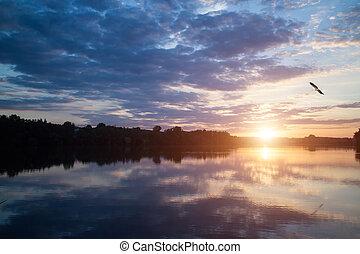 mooi, op, hemel, meer, ondergaande zon , vogel