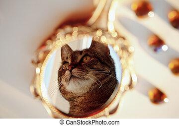 mooi, oud, ouderwetse , spiegel, en, in, informatietechnologie, de, reflectie, van, een, kat