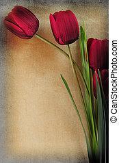 mooi, ouderwetse , bloemen, achtergrond, tulp