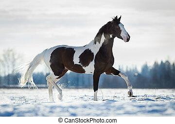 mooi, paarde, draf, in, de, sneeuw