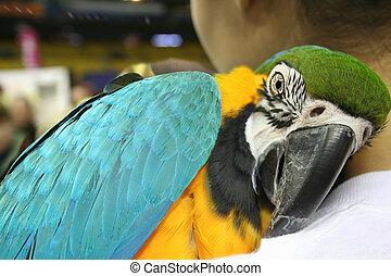 mooi, papegaai, op, mijn, schouder
