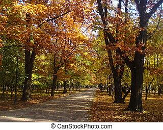 mooi, park, steegje, in, herfst