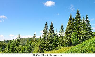 mooi, pijnboom bomen
