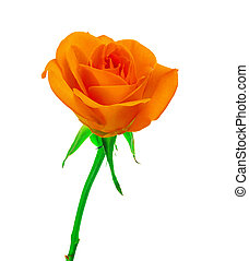 mooi, roos, sinaasappel