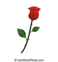 mooi, roos, vrijstaand, illustratie, vector, achtergrond, wit rood