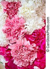 mooi, rose bloemen, achtergrond