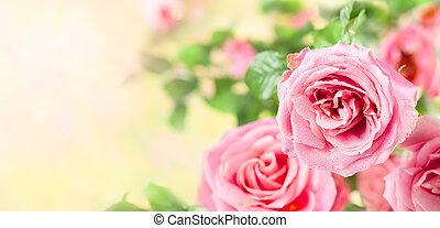 mooi, rose bloemen, rozen
