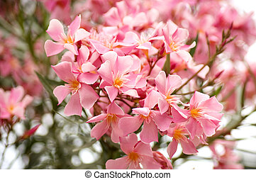 mooi, rose bloemen