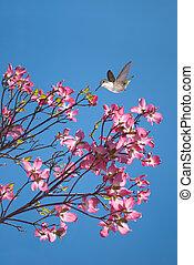 mooi, roze, blossom , en, vogels te vliegen, in, blauwe...